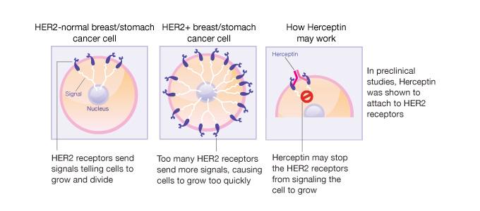 Схема приема герцептина
